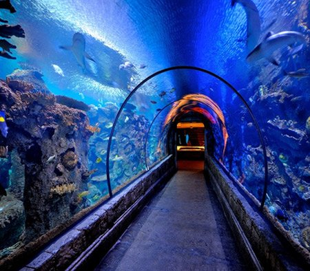shark reef aquarium cosa fare a las vegas